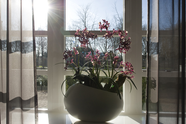 Fabulous bart u blooms with smalle vensterbank decoratie for Decoratie smalle vensterbank
